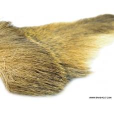 Bucktail Ginger