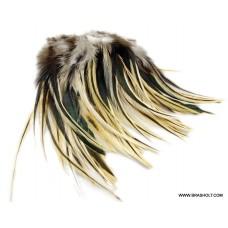 Cochackles badger natur