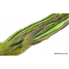 Egern skind zonker Chartreuse
