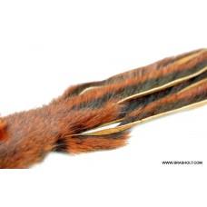 Egern skind zonker Red